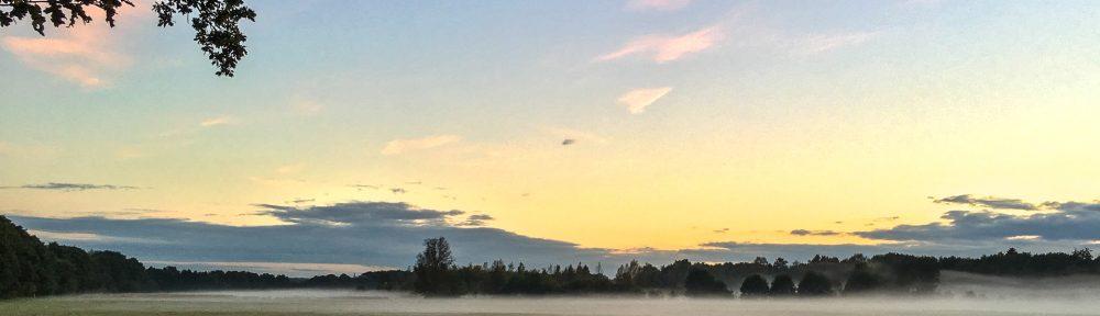 Nebel über den Seevewiesen